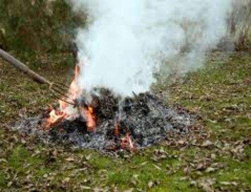 Betiltják Pécsen a kerti zöldhulladék égetését (szabadpecs.hu)